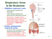 anatomy-physiology-ii-chapter-23-respiratory-system-part-3