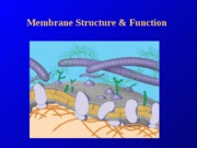 CH 7 Membrane structure & function