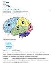 2 02 Psycology Docx Name Date School Facilitator 2 2 Brain