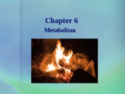 chapter 6 b metabolism