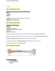 Ch.6 (BONE TISSUE) - Exam 2 Questions Key.pdf