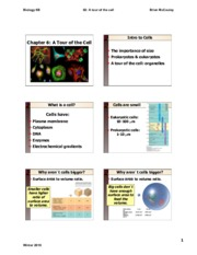 Lecture_2_Cells