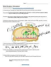 Sharp DNA Mutation Simulation Worksheet.pdf - N DNA M S ...