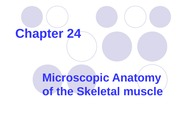 Muscle Tissue-24