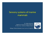 Lecture 4 Sensory systems of marine mammals