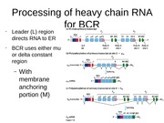BCR%2C+TCR%2C+and+SCID
