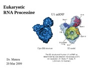Lecture 24 Euk RNA processing
