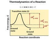 Thermodynamics of a Reaction