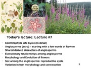 Plant Diversity Lecture 7 (Conifers, finished; Angiosperm Origins and Reproduction)-111014