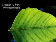 Chapter 10- Photosynthesis.pdf