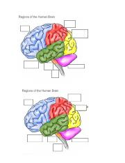 Brain Picture- no labels