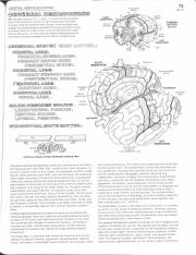 Cerebral Hemispheres color sheet.pdf