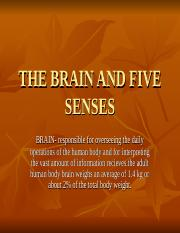brainandfivesenses-090511082853-phpapp02.ppt
