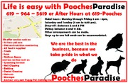 Pooches Paradise Half Page ad Good Copy