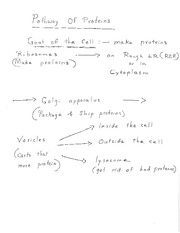Pathway of Proteins Notes