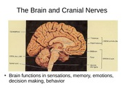 3. Brain and cranial nerves