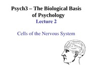 Lecture 2- Cells of the Nervous System-iclick