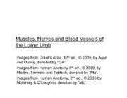 300-31 Muscles Nerves and Blood Vessels of the Lower Limb 2013 Lecture Slides