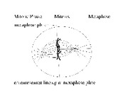 05-07_animal_metaphase