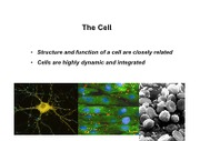 LSCI1002 - Chemistry of Life and The Cell - II.pdf