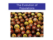 23_EvolutioninPopulations2a3_forupload