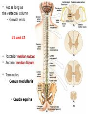 6 Anatomy of Spinal Cord_Student_S16.ppt