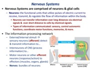 Lecture-14-Neurons_39004