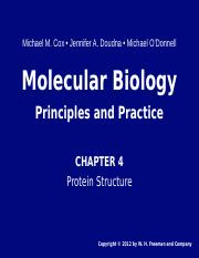 chapter 4 protein structure.ppt