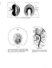 PHYS 1525 Renal Transparencies