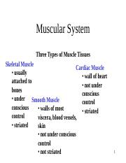 Muscular system.pdf