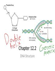 12_2_Notes_DNA_Structure Red 4