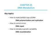 Lecture 25 - DNA Metabolism