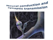 Neural conduction and synaptic transmission