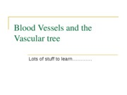 Blood Vessels and the Vascular tree