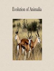 Ch 19 Evolution of the Animals online