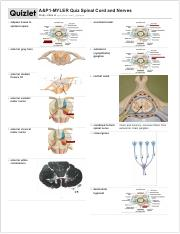 Study Spinal Cord