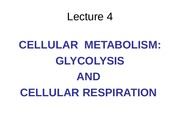 1. Cell Metabolism (6:30:15)