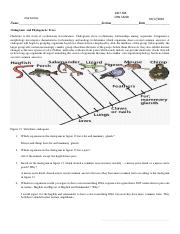 Museum and cladograms Bio2-3.pdf