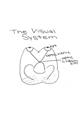 psyc 450 notes on the visual system