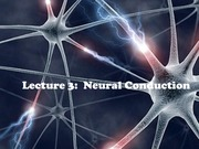 1_20F+ 1_23M Lecture_5_Neural_Conduction