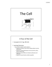 4-The Cell and Organelles