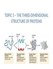 Topic 3 - The Three-Dimensional Structure of Proteins (Moodle).pptx