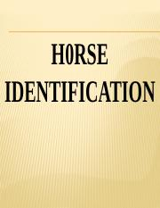 Horse identification Sept 2019.pptx