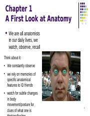 Chapter 1- Anatomy