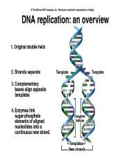 BSCI DNA Replication.ppt