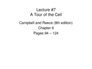 LECTURE-7_The Cell