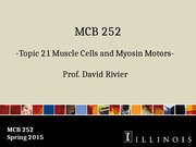 MCB 252 Topic 21 Muscle Cells and Myosin Motors Sp15
