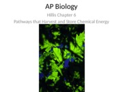 ch 6.1 ATP, Reduces Coenzymes, and Chemiosmosis Play Important Roles in Biological Energy Metabolism