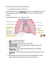 Chapter 20- The Cardiovascular System- The Heart.docx