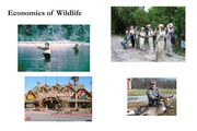 Lecture 26 - Economics of wildlife